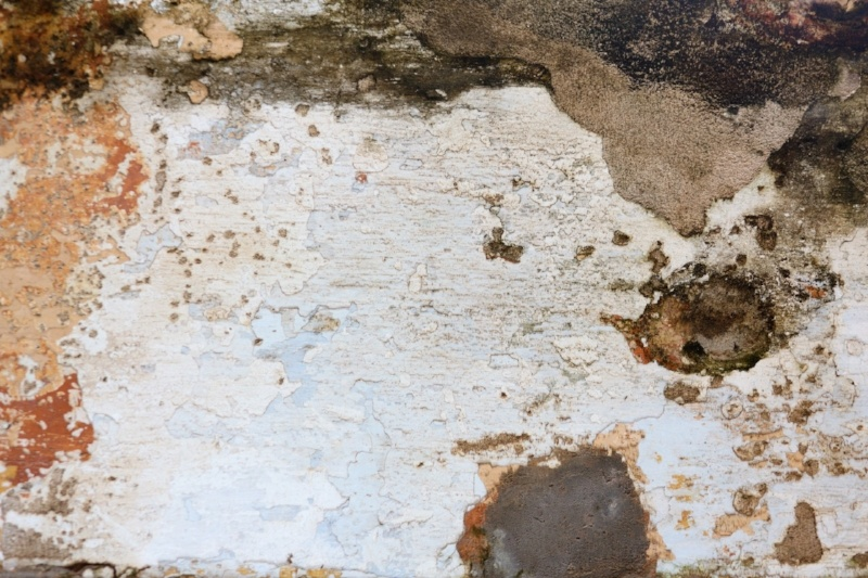 mold-wall-883465-edited